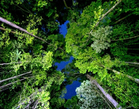 Earth 23 Forest Canopy