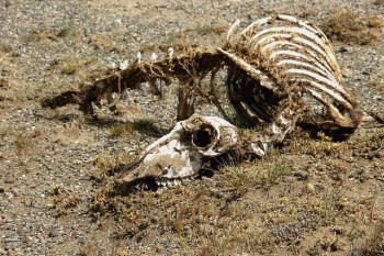 Feeding life after death: the legacy that carcasses can leave behind